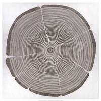 Tree Lines Fine-Art Print