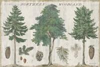 Woodland Chart I Fine-Art Print