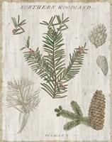 Woodland Chart II Fine-Art Print