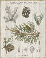 Woodland Chart III Fine-Art Print