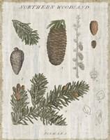 Woodland Chart IV Fine-Art Print