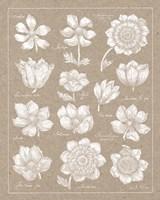 Anemone Plate I Fine-Art Print