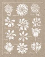 Anemone Plate II Fine-Art Print