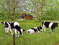 Bovine Beauties, Pennsylvania Fine-Art Print