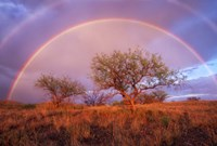 Arizona Rainbow Fine-Art Print