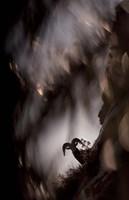 Bighorn Silhouette Best Fine-Art Print