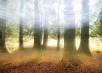 Blurred Trees Fine-Art Print