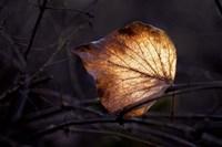 Bright Leaf Fine-Art Print