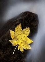 Maple Leaf Stranded Fine-Art Print