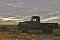 Black Truck In Pumpkin Patch 1 Fine-Art Print