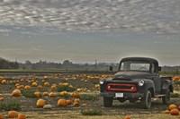 Black Truck In Pumpkin Patch 2 Fine-Art Print