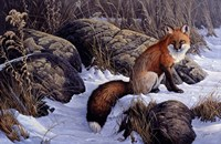 Mid Winter Pause - Red Fox Fine-Art Print