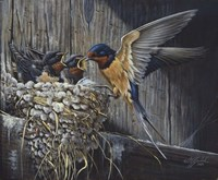 Country Living  - Barn Swallows Fine-Art Print