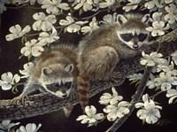 Dogwood Hideout - Young Raccoons Fine-Art Print