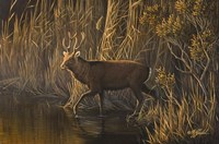 Evening Rounds Sika Deer Fine-Art Print