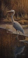 Heron Wading Fine-Art Print