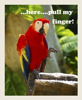 Parrot II with Words Fine-Art Print