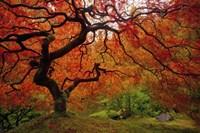 Tree Fire Fine-Art Print