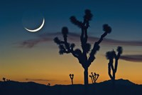Colored Sky with Moon and Cactus Fine-Art Print