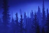 Blue Sky Forest Fine-Art Print