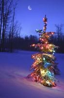 Bright Tree in Snow Fine-Art Print
