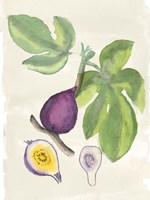 Watercolor Fruit I Fine-Art Print