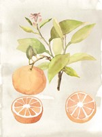Watercolor Fruit V Fine-Art Print