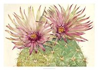 Cactus Blossoms I Fine-Art Print