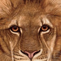 Eyes of the Lion Fine-Art Print