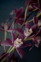 Dark Orchid III Fine-Art Print