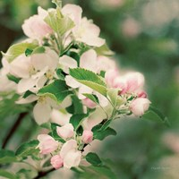 Apple Blossoms II Fine-Art Print