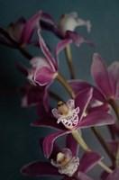 Dark Orchid IV Fine-Art Print