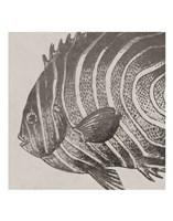 Vintage Fish II Fine-Art Print