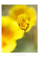 California Poppy III Fine-Art Print