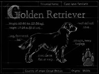 Blueprint Golden Retriever Fine-Art Print