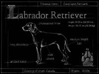 Blueprint Labrador Retriever Fine-Art Print