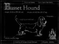 Blueprint Bassett Hound Fine-Art Print