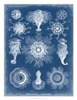 Marine Blueprint I Fine-Art Print