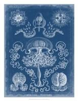 Marine Blueprint IV Fine-Art Print