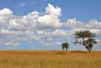 Kenya Tree Fine-Art Print