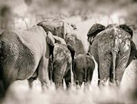 Vintage Elephant Fine-Art Print