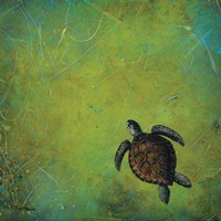 Slow and Steady Fine-Art Print