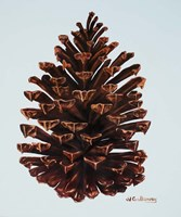 Guilded Pinecone Fine-Art Print