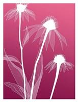Floral Silhouette 5 Fine-Art Print