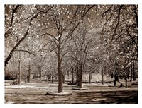 Cherry Tree Park Fine-Art Print