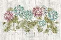 Vibrant Row of Hydrangea on Wood Fine-Art Print