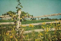 Blissful Country V Fine-Art Print