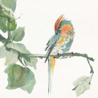 Crested Cockatoo Fine-Art Print