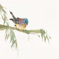 Finch Fine-Art Print