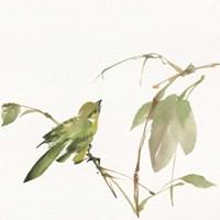 Sisken Fine-Art Print